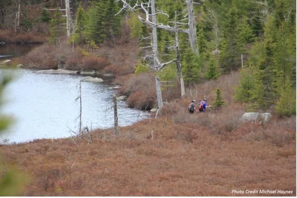 Crossing a Bog