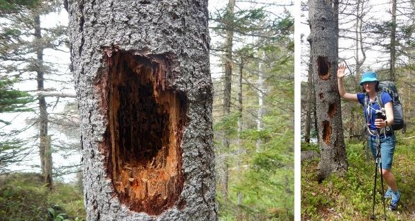 Tree (600x319)