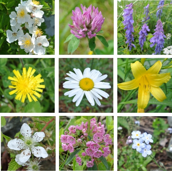 Flowers (600x596)